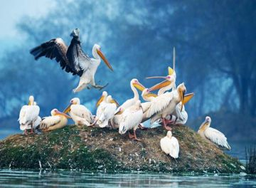 BHARATPUR BIRD SANCTUARY HAVEN ON BIRDS FROM OVER THE WORLD