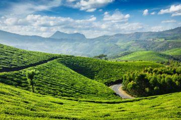 INCREDIBLE PLACES TO VISIT IN INDIA BEFORE YOU DIE MUNNAR KE