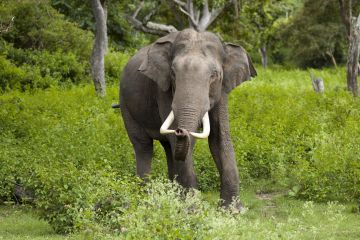 BEST BEAUTIFUL TOURIST PLACES IN BANDIPUR