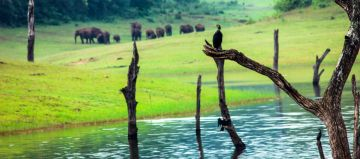 BEST BEAUTIFUL TOURIST PLACES IN THEKKADY