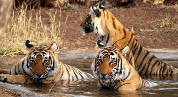 BEST BEAUTIFUL TOURIST PLACES IN KANHA NATIONAL PARK
