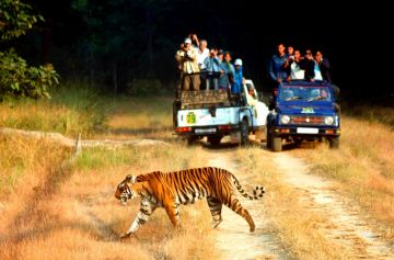 HAVE AN ADVENTUROUS DAY OUT AT CORBETT NATIONAL PARK