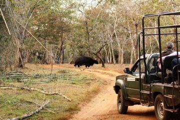 BEST NATIONAL PARKS AND WILDLIFE SANCTUARIES NAGARHOLE NATIO