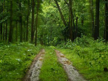 BEST NATIONAL PARKS AND WILDLIFE SANCTUARIES BHADRA WILDLIFE