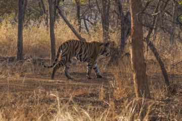 BEST NATIONAL PARKS AND WILDLIFE SANCTUARIES PANNA NATIONAL