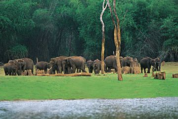 BEST PLACES TO VISIT IN SOUTH INDIA THEKKADY