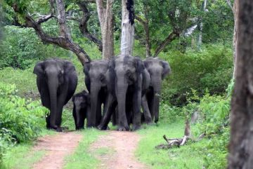 BEST PLACES TO VISIT IN SOUTH INDIA BANDIPUR NATIONAL PARK