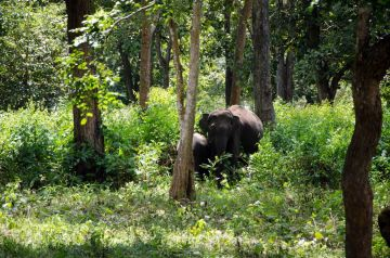 BEST PLACES TO VISIT IN SOUTH INDIA NAGARHOLE WILDLIFE SANCT
