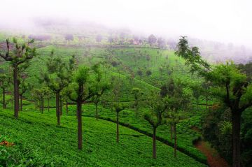 BEST HILL STATIONS TOUR PACKAGE IN COONOOR