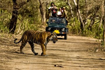JEEP SAFARIS IN CORBETT NATIONAL PARK RAMNAGAR