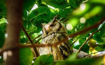 BIRD WATCHING IN BHARATPUR BIRD SANCTUARY RAJASTHAN
