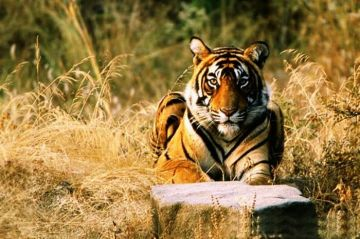 BEST WILDLIFE EXPERIENCE IN RANTHAMBORE NATIONAL PARK