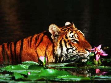 BEST WILDLIFE EXPERIENCE IN SUNDERBANS NATIONAL PARK