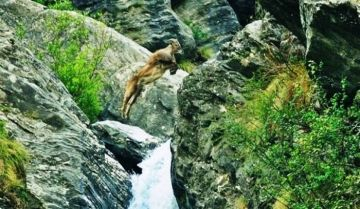 BEST WILDLIFE EXPERIENCE IN THE GREAT HIMALAYAN NATIONAL PAR