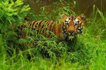 BEST WILDLIFE EXPERIENCE IN TADOBA