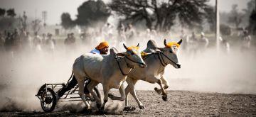 FAMOUS FESTIVALS OF INDIA KILA RAIPUR RURAL OLYMPICS PUNJAB