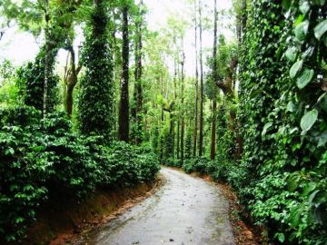COORG  WALK AMIDST THE COFFEE PLANTATIONS OF SOUTH INDIAN SCOTLAND