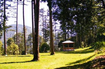 DHANAULTI EXPLORE THE MOST BEAUTIFUL ALPINE FORESTS