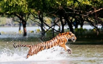 SUNDARBANS  LET THE WILDLIFE ENTHRALL YOU