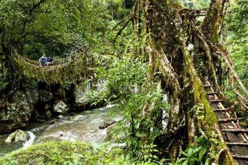 SOAK IN WITH THE NATURE AT THE LIVING ROOT BRIDGES CHERRAPUNJI
