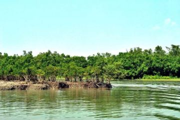 BATHE IN THE BEAUTY OF RIVER CRUISE SUNDERBAN