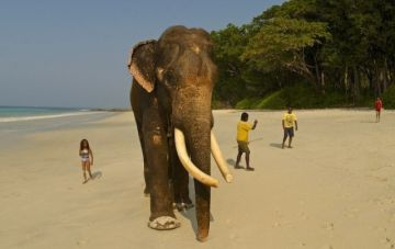 SNORKEL YOUR WAY OUT WITH RAJAN, THE SNORKELING ELEPHANT