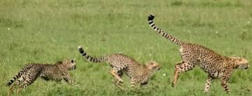 10 days Wildlife and Beach Safaris, Beach and Bush Holidays