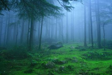 BREATHTAKINGLY BEAUTIFUL PLACES IN DEODAR FOREST HIMACHAL PRADESH
