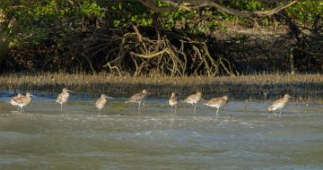 SUNDERBANS FOR ITS ENIGMATIC WILDERNESS