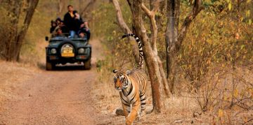 RANTHAMBORE RESERVE NATIONAL PARKS AND WILDLIFE SANCTUARIES