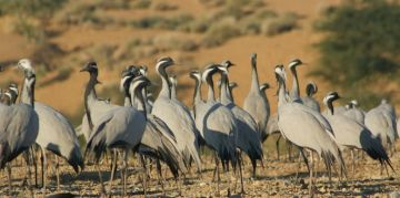DESERT RESERVE NATIONAL PARKS AND WILDLIFE SANCTUARIES