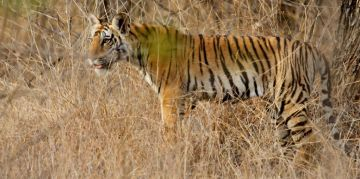 PENCH RESERVE NATIONAL PARKS AND WILDLIFE SANCTUARIES