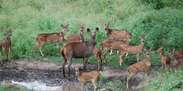 INDRAVATI RESERVE NATIONAL PARKS AND WILDLIFE SANCTUARIES