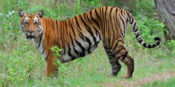 BANDIPUR RESERVE NATIONAL PARKS AND WILDLIFE SANCTUARIES