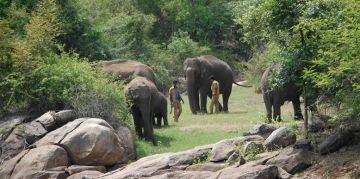 BANNERGHATTA  RESERVE NATIONAL PARKS AND WILDLIFE SANCTUARIES