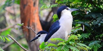 GUINDY RESERVE NATIONAL PARKS AND WILDLIFE SANCTUARIES
