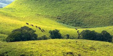 KUDREMUKH RESERVE NATIONAL PARKS AND WILDLIFE SANCTUARIES