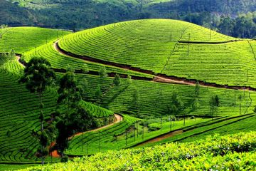 MUNNAR ECONOMICALLY CHEAP PLACES TO VISIT IN INDIA