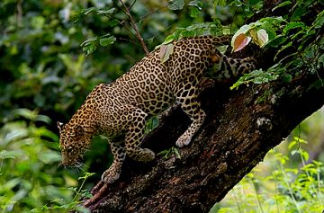 BROWSE THROUGH BANDIPUR NATIONAL PARK TOUR PACKAGES TO PLAN YOUR TRIP
