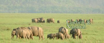 Great Nainital and Corbett Package