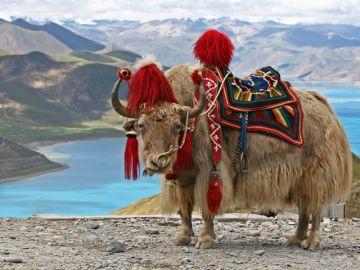 7 N 8 D Enchanting Bhutan Tour Package