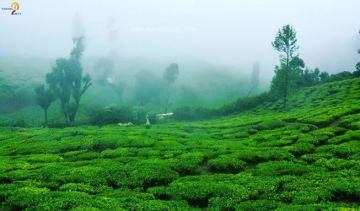 Beautifull Mysore, Coorg & Ooty Twin Sharing