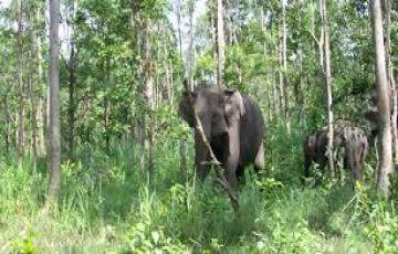 Mudumalai Wild Life Packages