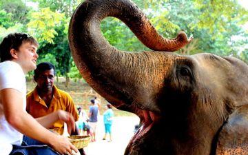 Mini Sri Lanka Tour
