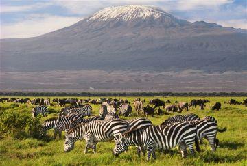 4 Days Kilimanjaro Special Safari in Kenya Rhino Valley, Tsavo West National Park, Kenya