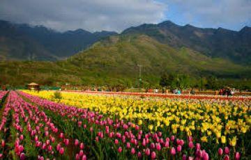 Enchanting Kashmir