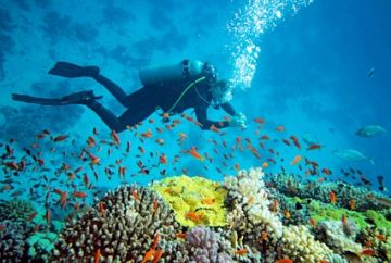 TPJ - 211 andaman  tour  package
