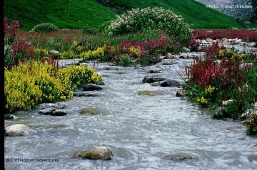 Valley Of Flowers and Badrinath Package Ex. Haridwar