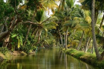 Kerala 4 Nights / 5 Days Tour Package