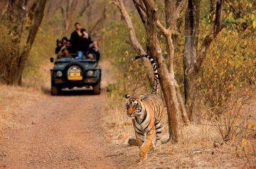 WILDERNESS IN RANTHAMBHORE